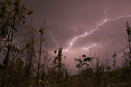 Lighting Storm In Forest