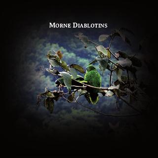MORNE DIABLOTINS | Rodolphe ALEXIS