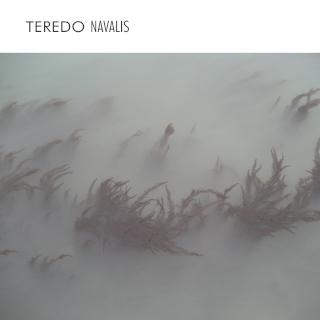 TEREDO NAVALIS | Enrico Coniglio