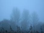 Four walks around a year: winter   Sebastiane Hegarty