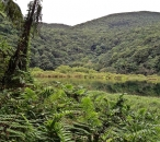 Le Grand-Etang,  Guadeloupe National Park