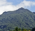 the Morne Diablotins (largest volcano on Dominica – 1447m)