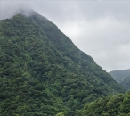 Primary forest on the slope of Morne Trois Pitons
